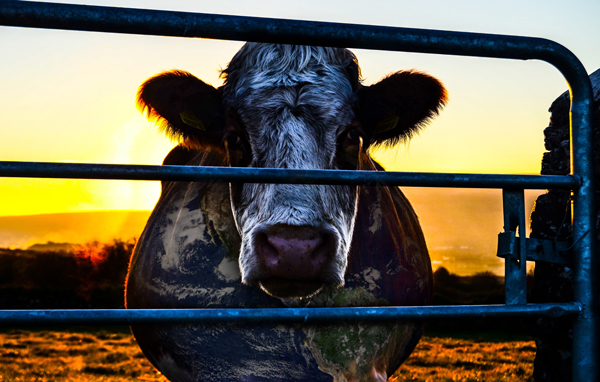 Cowspiracy: The Sustainability Secret – 10:00am 85min. FFR