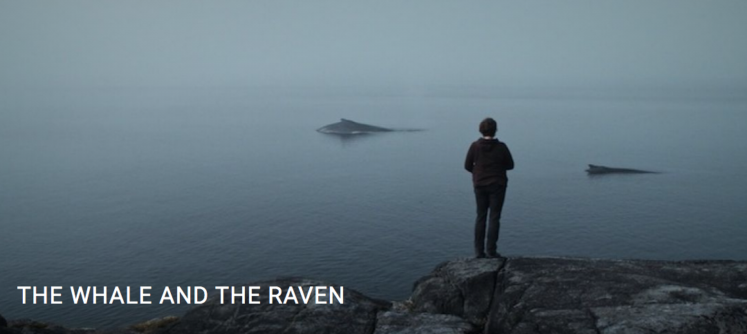 Film Screening: The Whale & The Raven- Tues. Nov 5th . 7pm at NIC