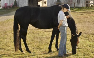 Film Series: Walk On: The Horse Healer – Online Oct. 8-11.